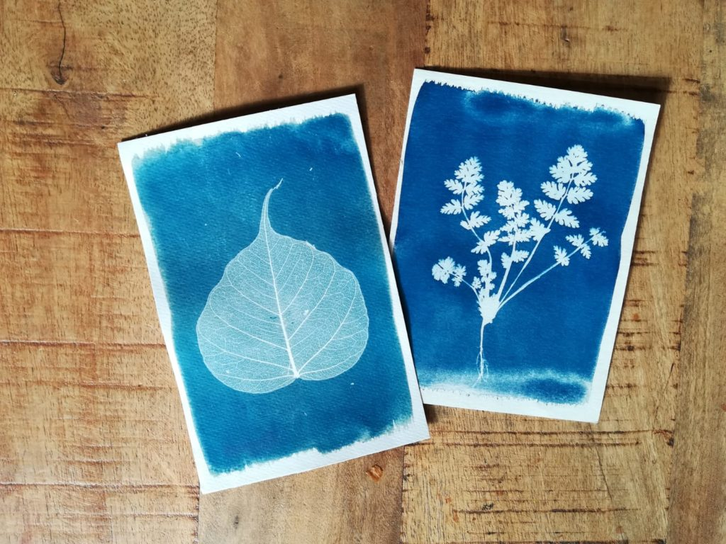 blauwdrukken A6 sunprint cyanotype skeletblad